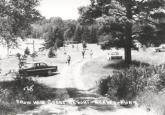 Historic CWC Luna tree circa 1958