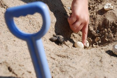 baby snapping turtle hatch on the beach at crow wing crest resort